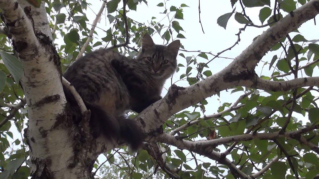 Кошка на дереве - YouTube
