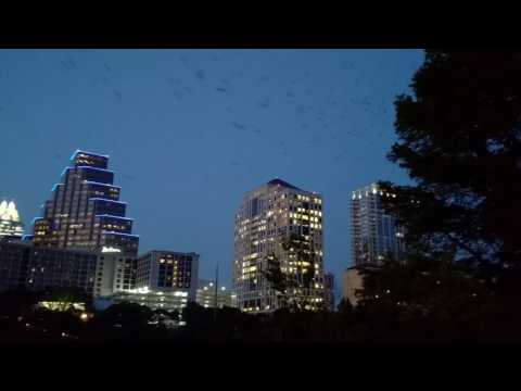 Bats emerging from Congress Avenue Bridge at Austin, Texas
