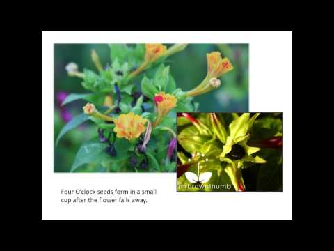 Saving Seeds from Flowers and Herbs - Ira Wallace at Seed Savers Exchange