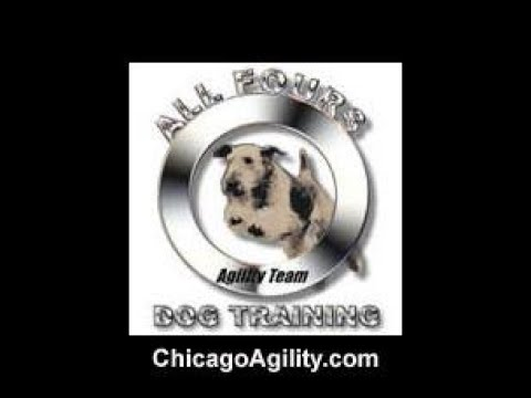 Clumber Spaniels CAN do agility!