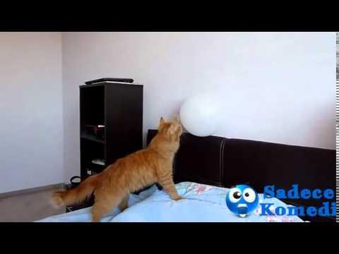 Kedi'nin Balon İle İmtihanı