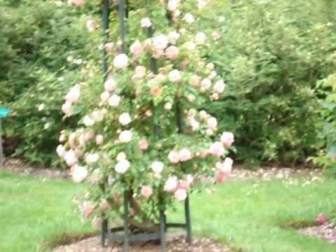 Du jardin d 39 essai d 39 alger la roseraie de limoges youtube - Dutronc petit jardin youtube limoges ...