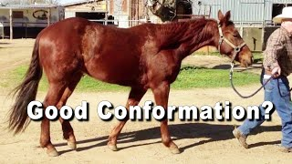 Reining & Cutting Horse Conformation... Good Or Bad?