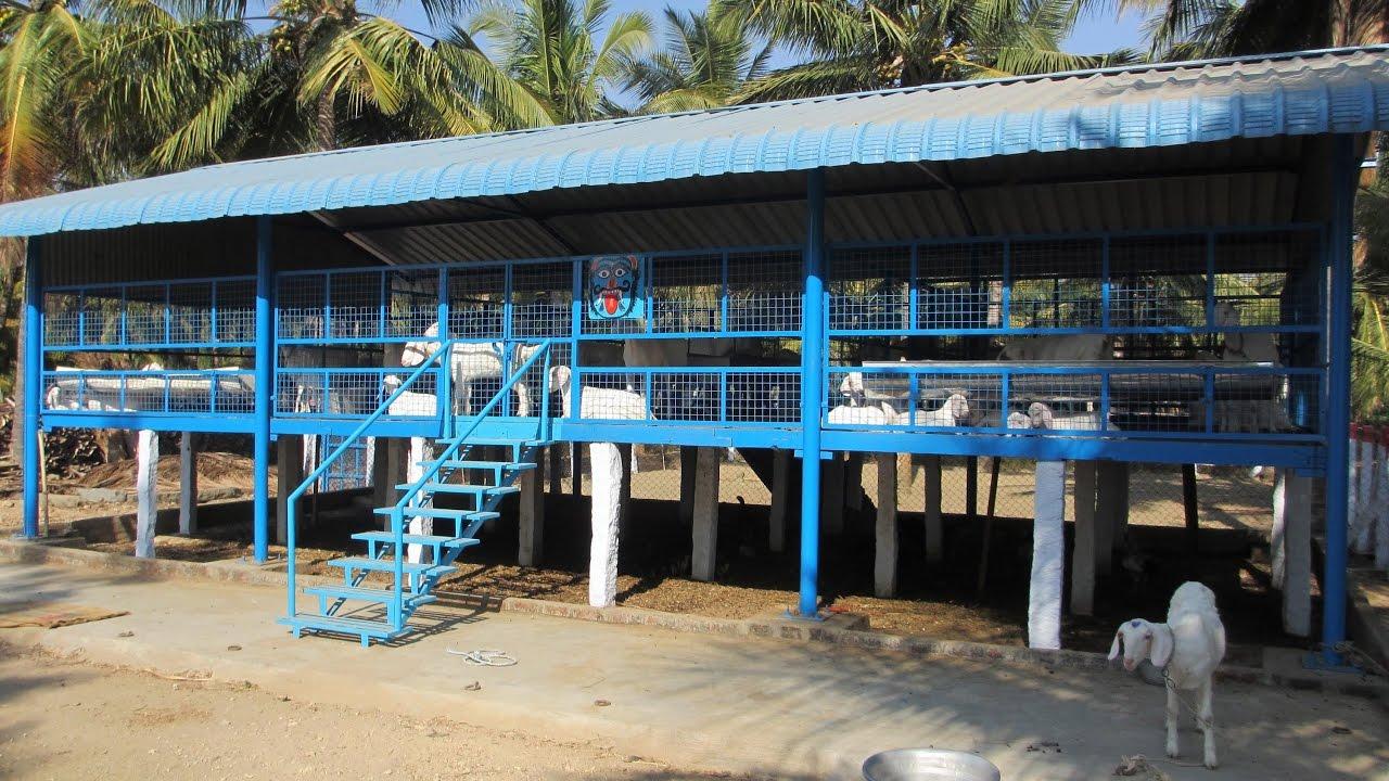 Actual Profit In Goat Farming In Hindi Part 1