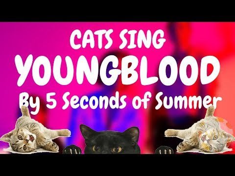 Cats Sing Youngblood by 5 Seconds of Summer | Cats Singing Song