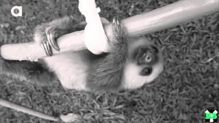 Sad sloth death