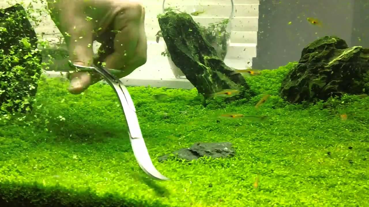 poda de plantas acuáticas en acuario plantado usando tijeras de doble curvatura