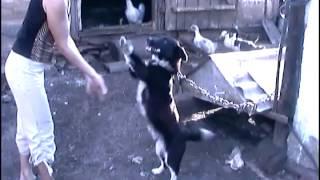 Просто ВИДЕО - 8: Танцующие животные