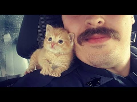 download This Cop Gave a Home to a Kitten Rescued From a Dumpster Now They're Crime Busting Partners
