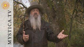 MYSTICA.TV: Dr. Wolf-Dieter Storl - Die Weide