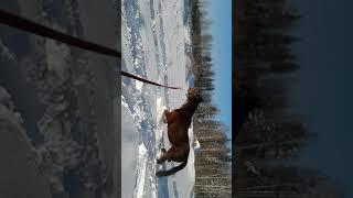 Очень глубокий снег на Урале. Лошадь в снегу. Видео про лошадей