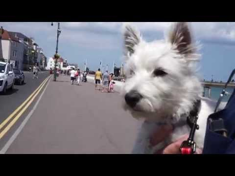 PUPPY'S FIRST DAY OUT, AT THE BEACH! - Hattie the Westie