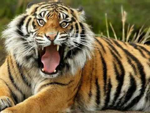 11c048f691dc RELAX-SONIDOS DE LA SELVA-ANIMALES SALVAJES.wmv - YouTube