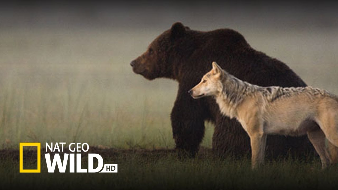 Best Nature Documentary Youtube
