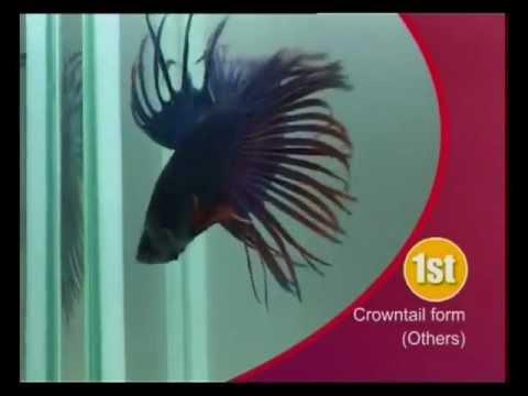 В Мегагрине живут аквариумные рыбки. Названия аквариумных рыбок