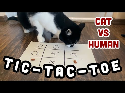 Tic-Tac-Toe   Does the CAT understand the GAME? // CAT vs HUMAN
