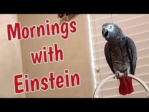 Einstein talking and waiting for breakfast