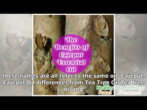 14-uses-for-cajeput-essential-oil---healthy-focus
