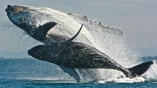 15 AMAZING Whale Facts!