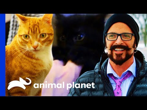 Jackson Galaxy Meets Cat Celebrities Cole & Marmalade! | My Cat From Hell
