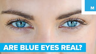 Are Blue Eyes Really Blue? - Sharp Science