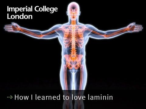 How I learned to love laminin