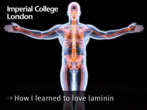 How I learned to love laminin
