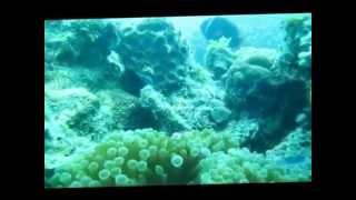 Belitung Underwater - Ship Wreck - BIG Belitung Diving Tour