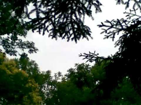 il canto degli uccelli.mp4