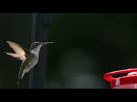Probing the Big Bang of bird evolution