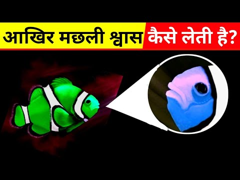 Fish- How Fish Breathe In Water In Hindi | How Do Fish Breathe In Water In Hindi, #MyThoughts