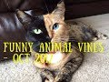 Funny Animal Vines October 2017