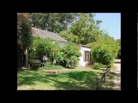 wine and olive farm for sale in Paarl, South Africa by Census Real Estate