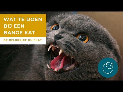 ANGST BIJ KATTEN DEEL 2: WAT TE DOEN BIJ EEN BANGE KAT? – De gelukkige huiskat- kattengedrag