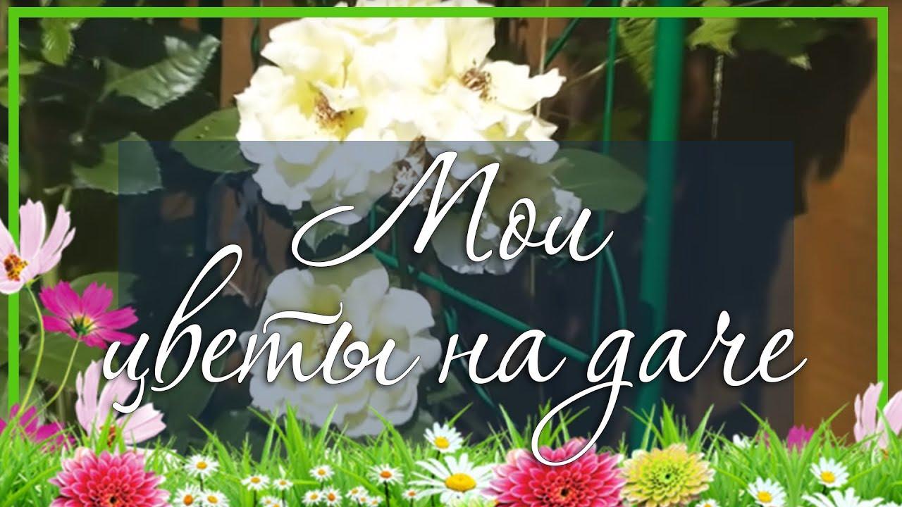 цветы на дачу фото и название