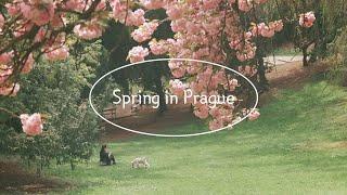 Spring in Prague 프라하 브이로그