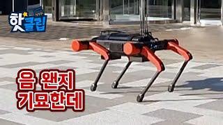 네 발로 걷는 로봇의 핵심기술 [핫클립] / YTN 사…
