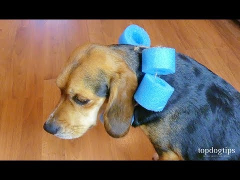 How To Make A Dog Cone Cheap And Easy Diy Guide