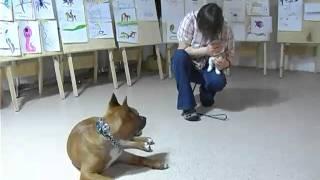 Все О Домашних Животных: А Кошки Против Собак?