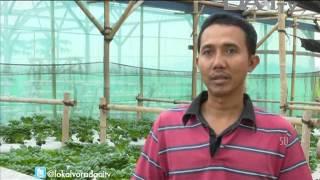 """DAAI TV Lokalvora """"Geliat Hidroponik Banjar"""""""