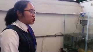 Publication Date: 2019-03-30 | Video Title: 龍翔官立中學《開放日 》同學介紹魚菜共生