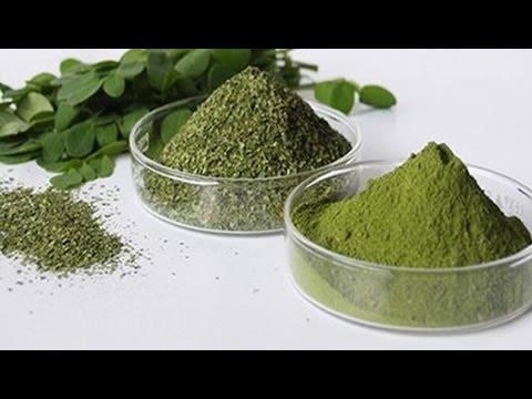 La Forma Correcta En Que Debe Consumirse La Moringa El Milagroso Árbol De La Vida
