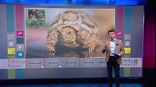 بي_بي_سي_ترندينغ: سخرية الأردنيين من خفض ضريبة المبيعات على السلاحف والزواحف
