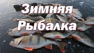 Зимняя Рыбалка на Окуня ЭКСТРИМ Первый лёд Ловля окуня зимой Балансир на окуня Окунь зимой