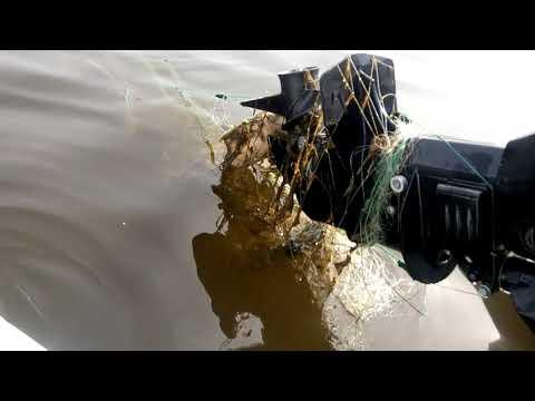 Рыбалка в Харабалях. Налетел на сеть. Твари бракуши.