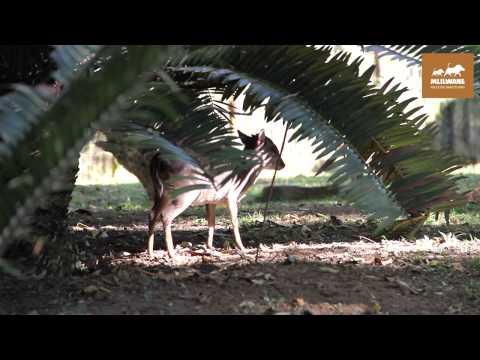 Travel Update visits Mlilwane Wildlife Sanctuary in Swaziland