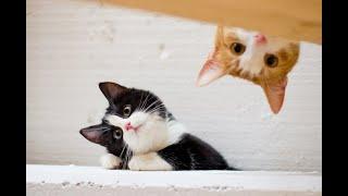 Фото Приколы с котами\\котики наркотики\\смешные животные №2