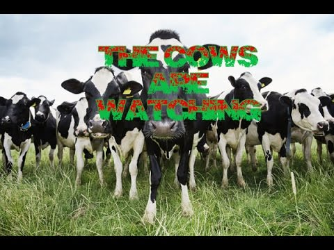 The Cows Are Watching | This Game Is Tipping Crazy |