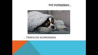 PSIA SERIA - Pies to zwierzę, nie zabawka.