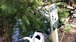 Dog Misbalances on Tree Branch and Falls into Lake Below - 1011343